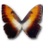 Morpho-Hecuba-sunset-icon